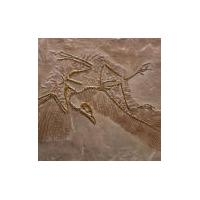 Matcrete Decorative Concrete Products Archaeopteryx Fossil (Bird)